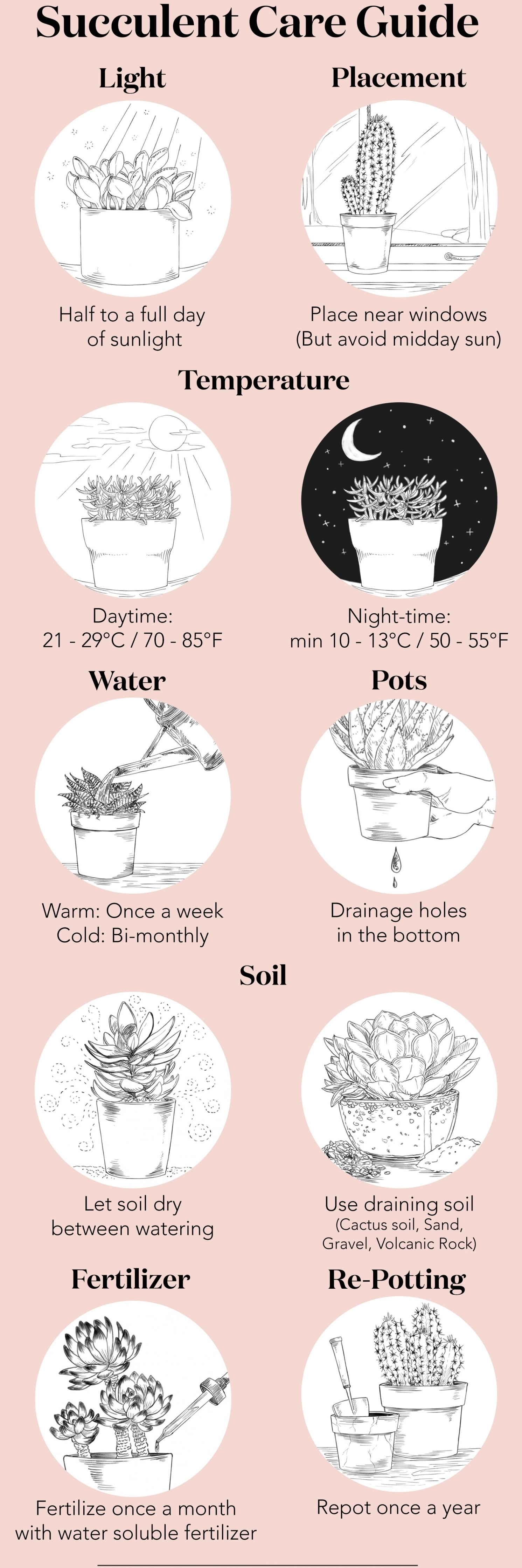 How-to-care-for-your-succulents-778x2334%402x.jpg