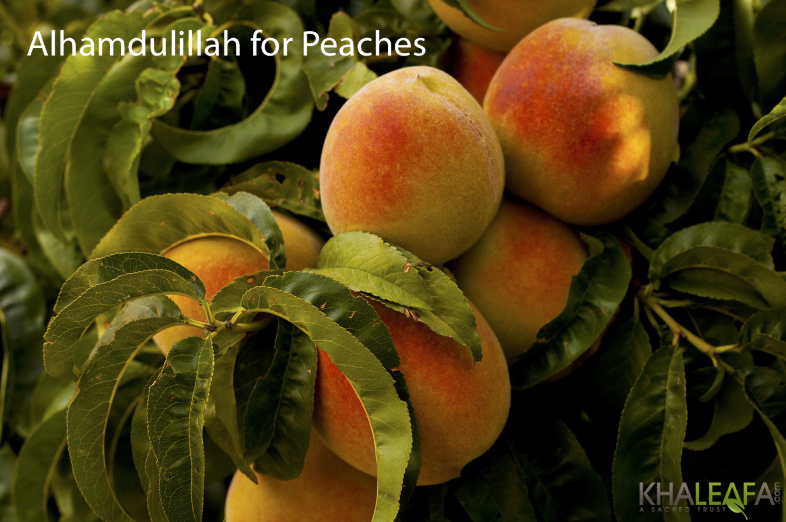 AH-peaches.png
