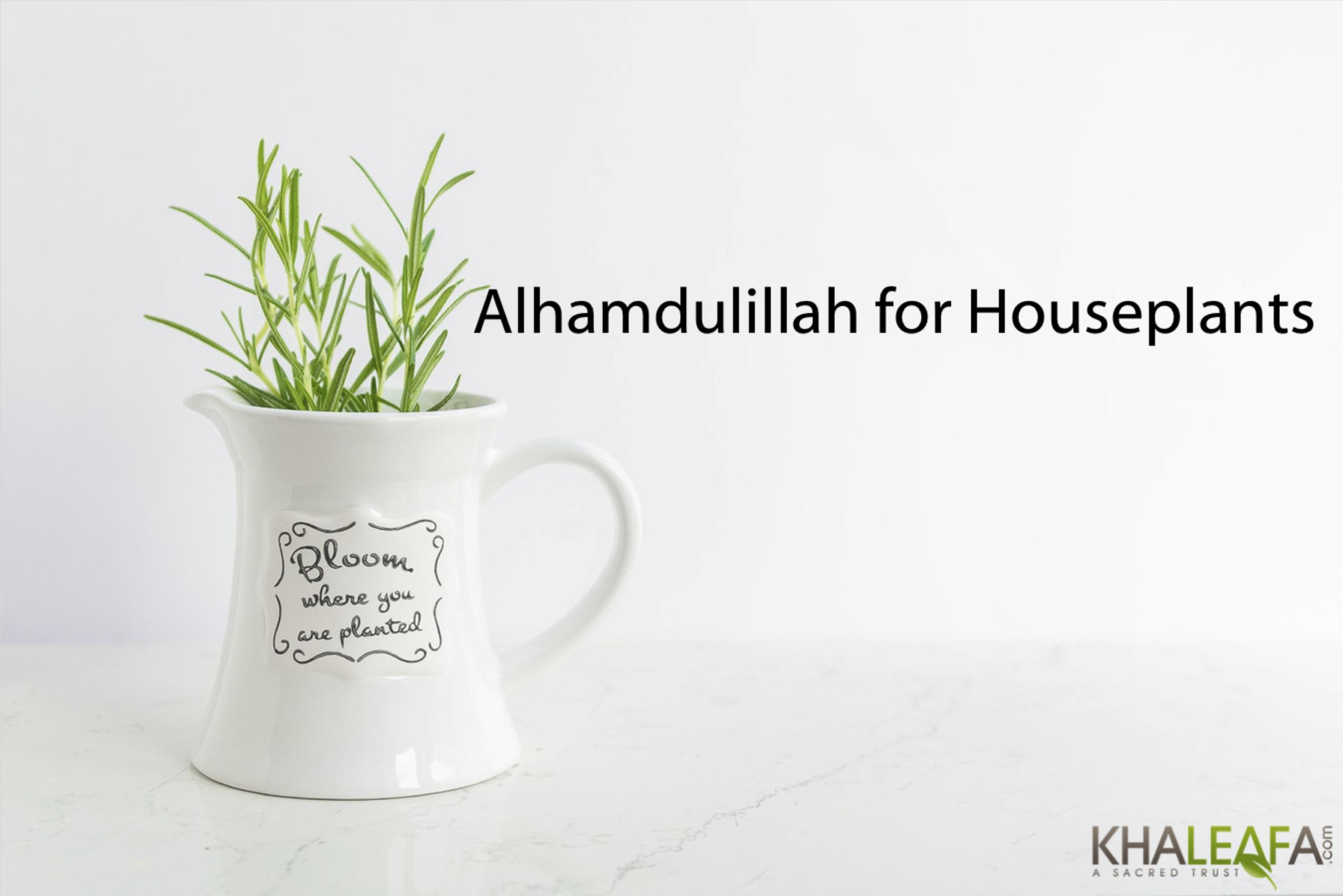 AH-houseplants.png