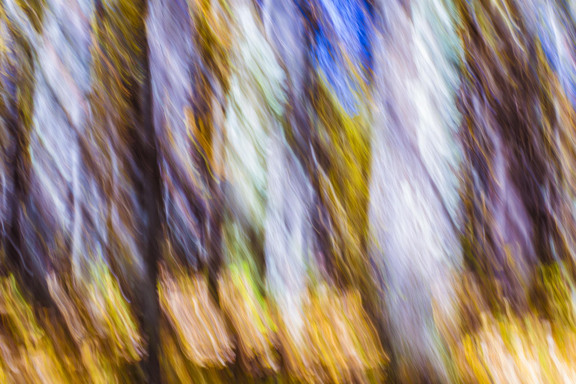 OC_AlleghenyForest_Abstract_2015-001.jpg