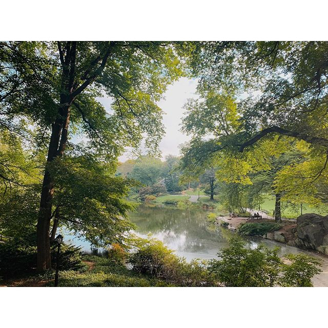 Magical Central Park looking like a painting this morning ✨#centralpark #magic