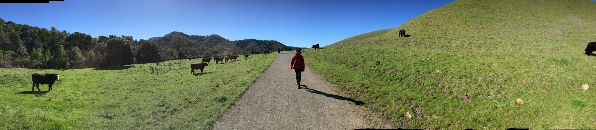 Except, at one point there were cows along the trail, and I was nervous because I was wearing red.