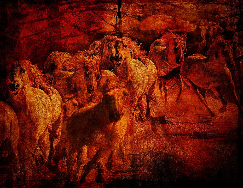 wild_fire_horses-panic.jpg