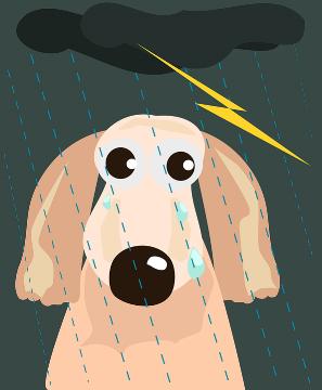 RainDog.png
