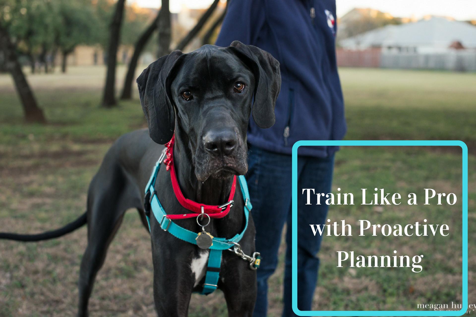 Proactive Dog Training (1).png