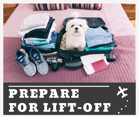 White Dog In Suitcase.png