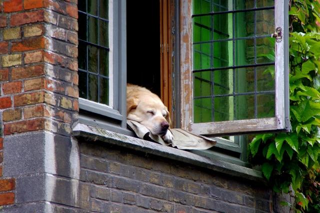 dog dreaming at window.jpg