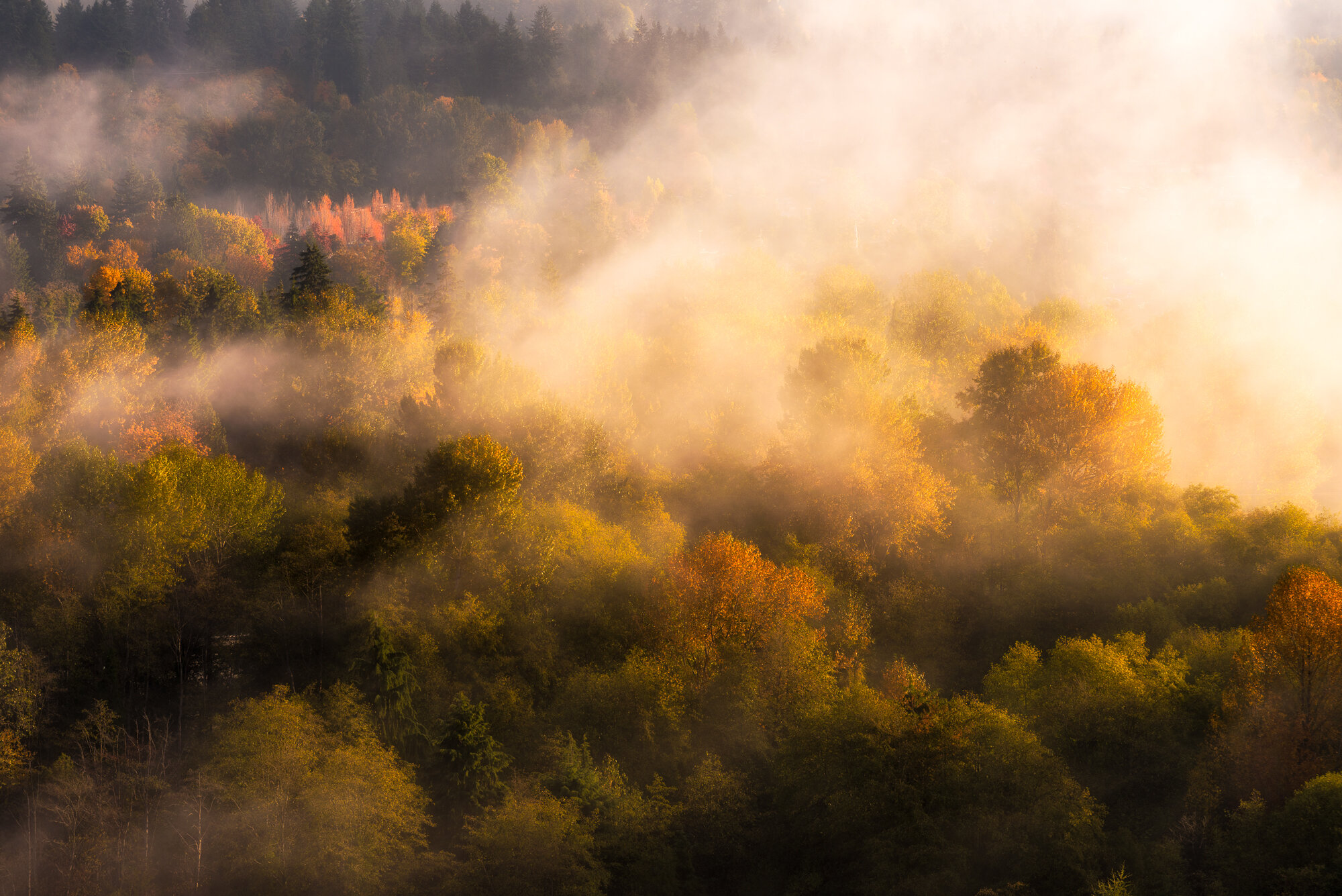 """Vancouver Fog Photography: """"Golden Touch"""""""