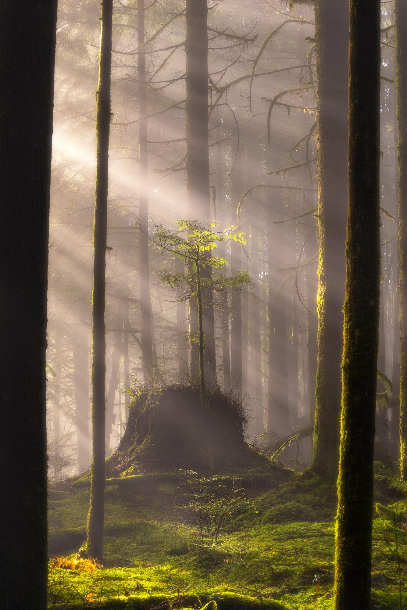 Vancouver Fog Photography: 'Illuminated'