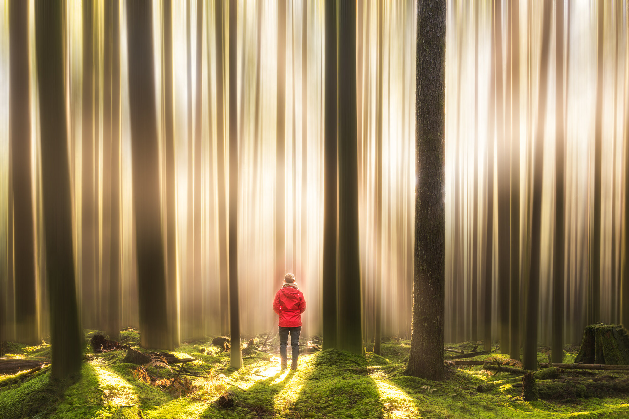 Vancouver Fog Photography: 'Walking in a Dream'