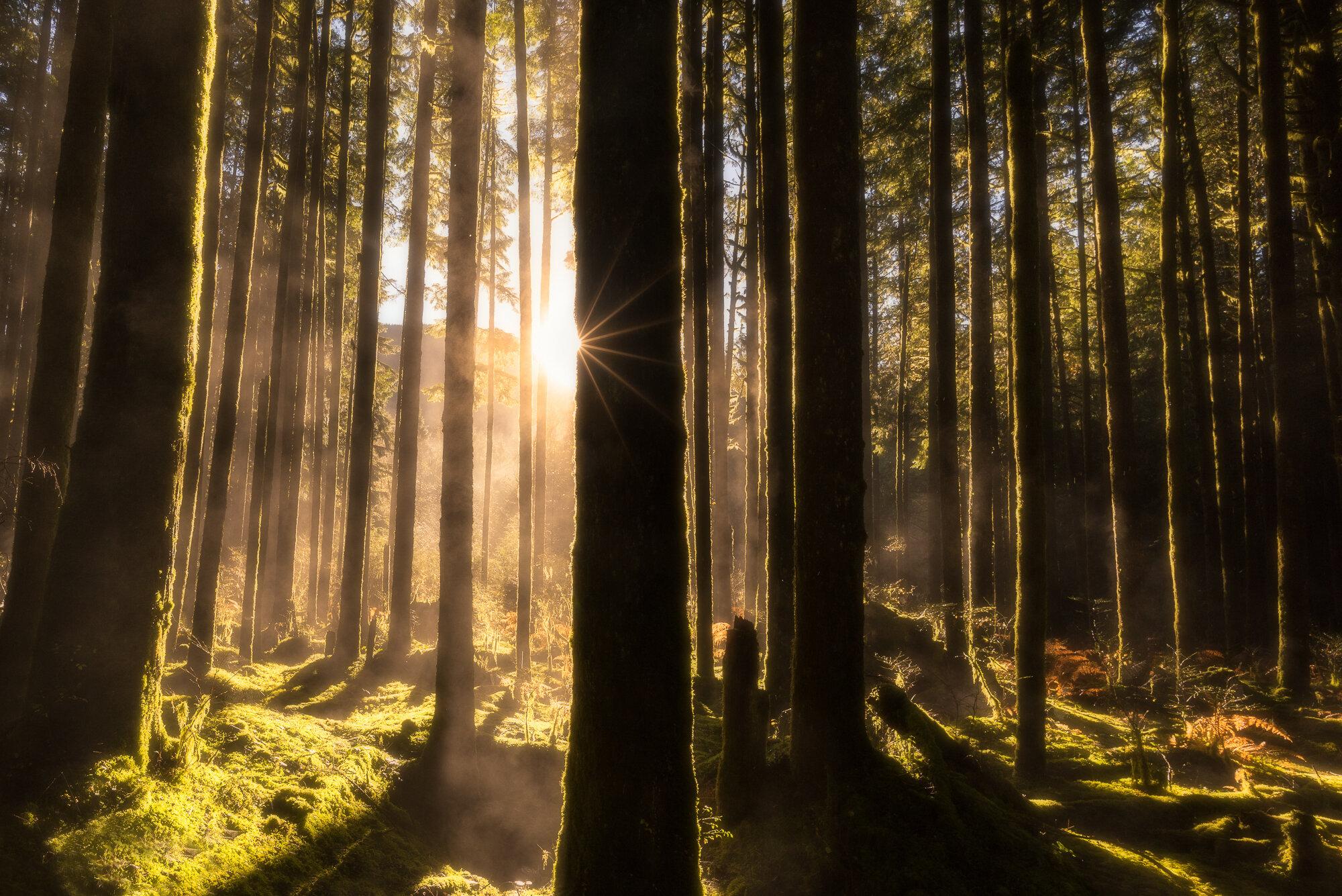 Vancouver Fog Photography: 'Foggy Sunburst'