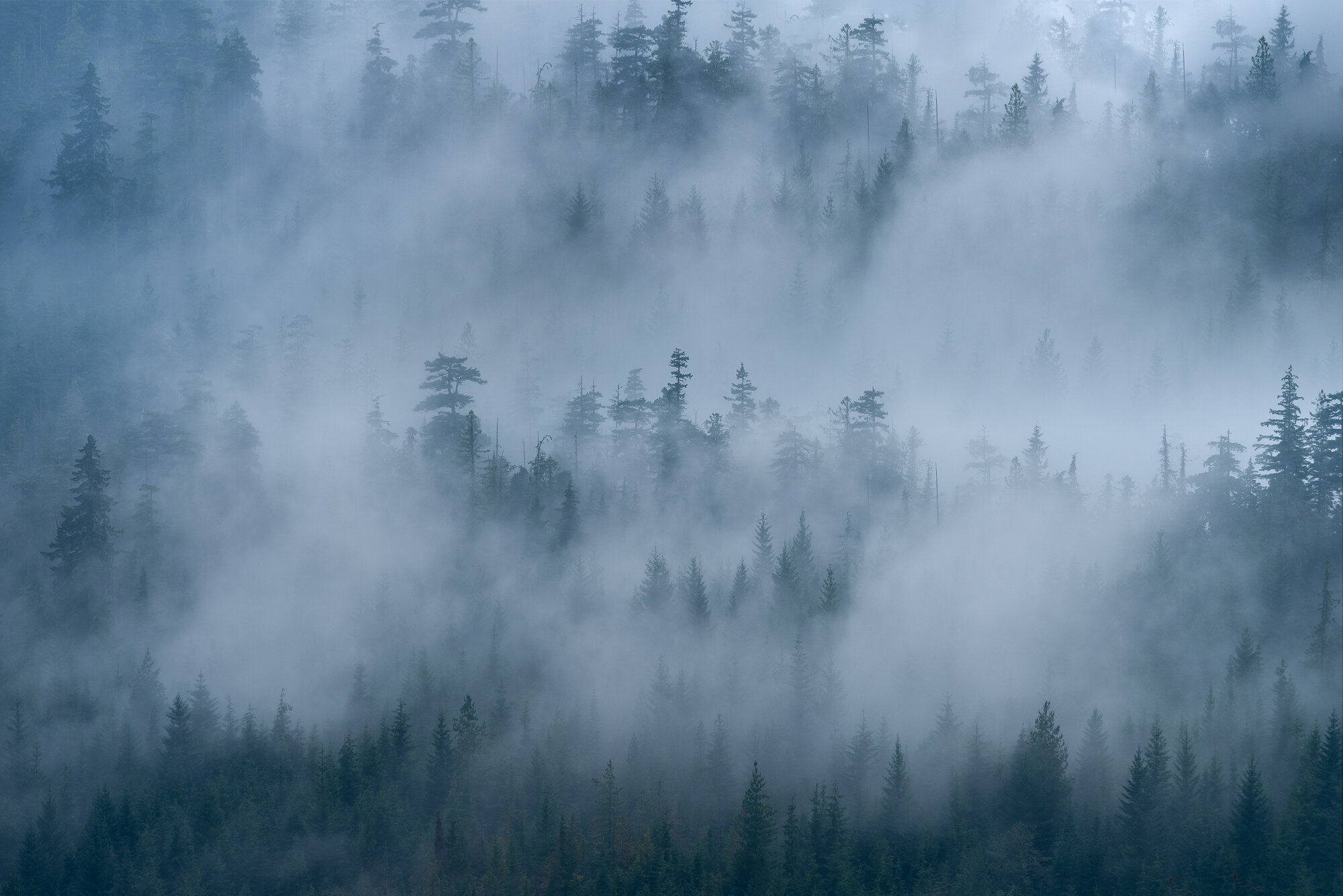 Vancouver Fog Photography: 'Misty Forest'