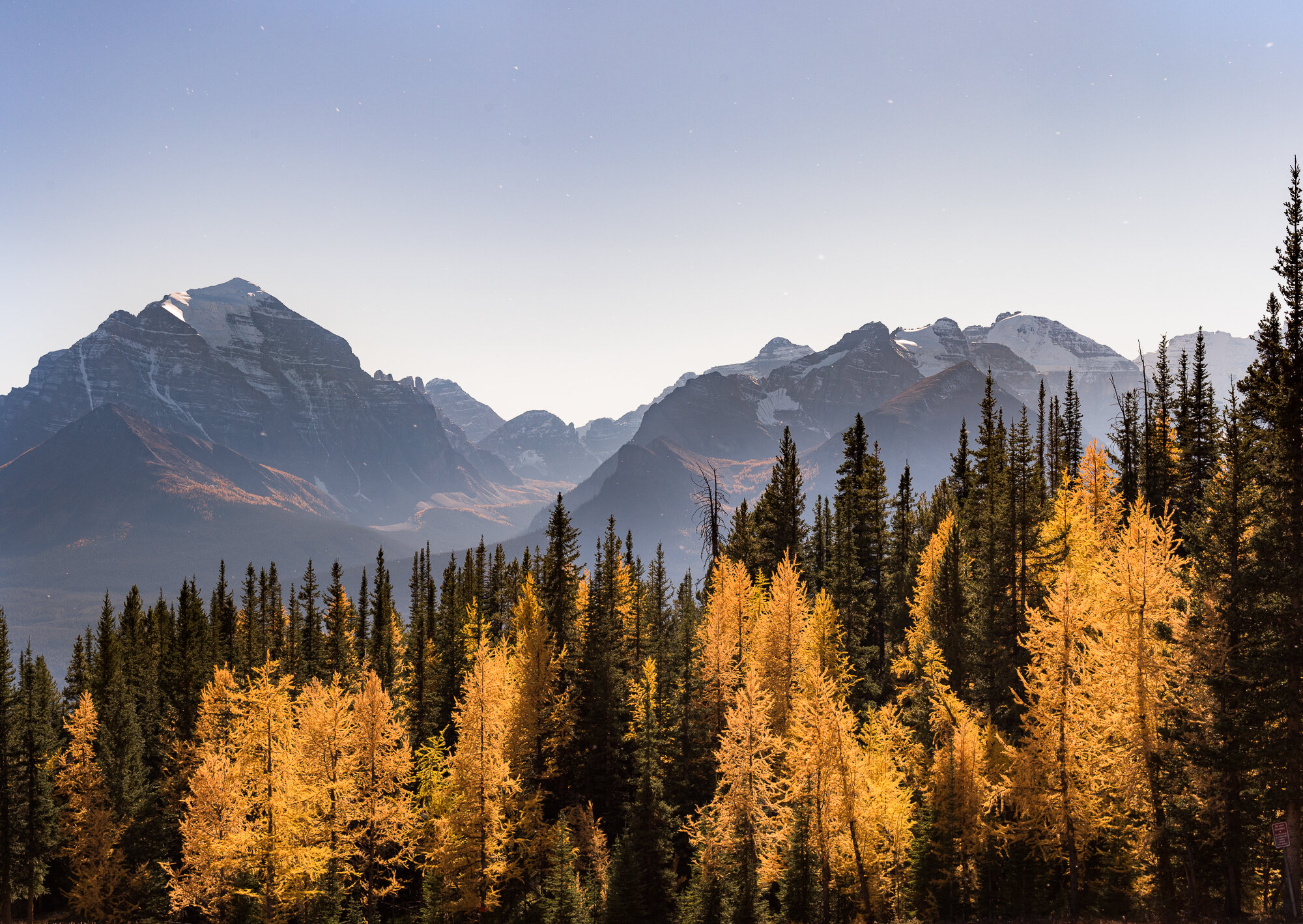 Banff Photography: 'Larch Explosion'