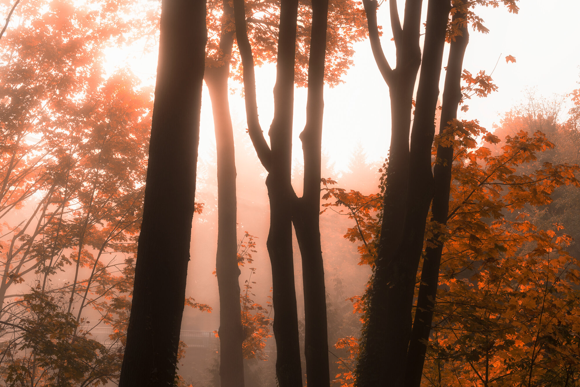 Fine Art Photography: 'Through the Mist'