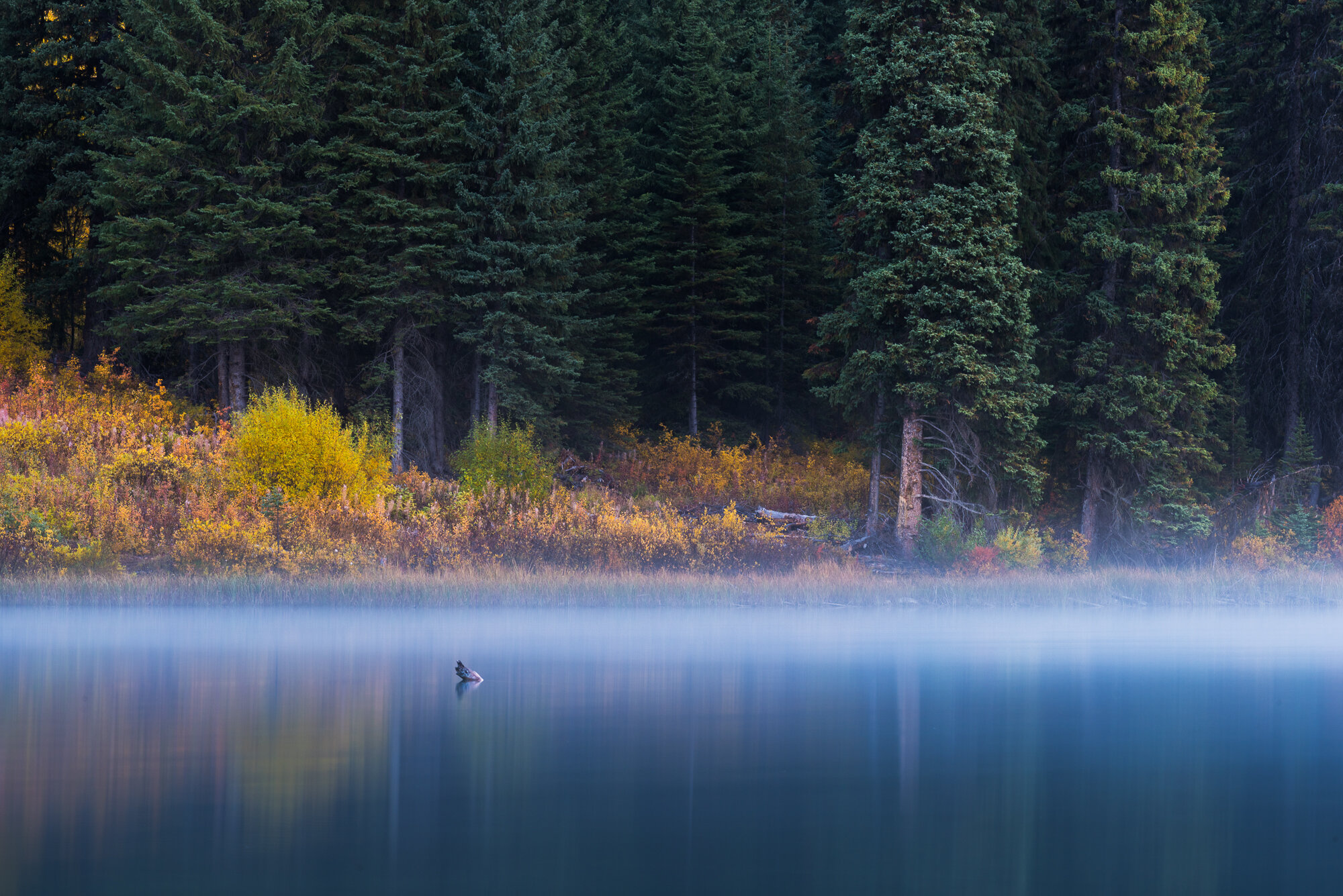 """Fine Art Photography: 'Fall Morning from Emerald Lake""""'"""