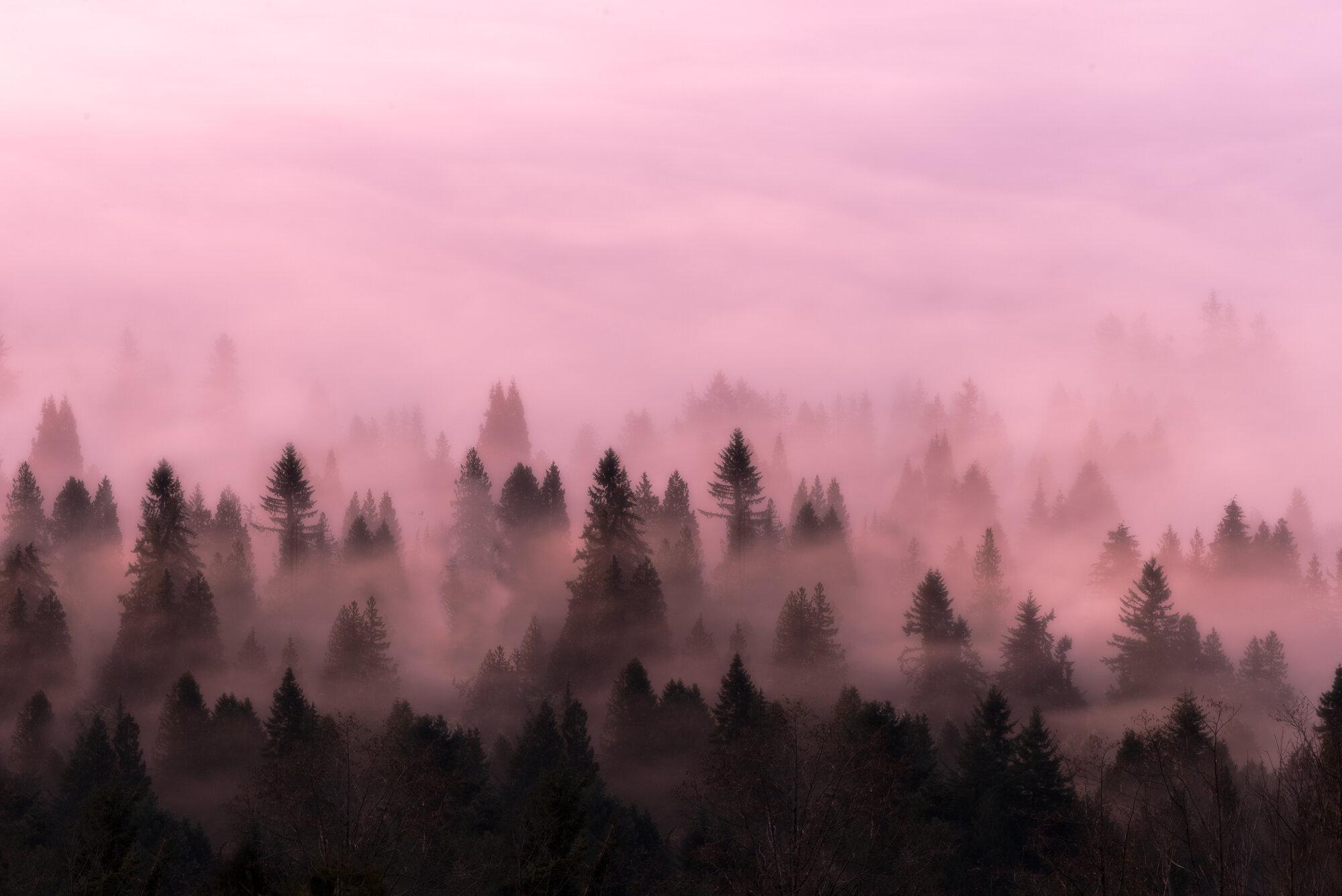 Fine Art Photography: 'Foggy Morning Pastels'