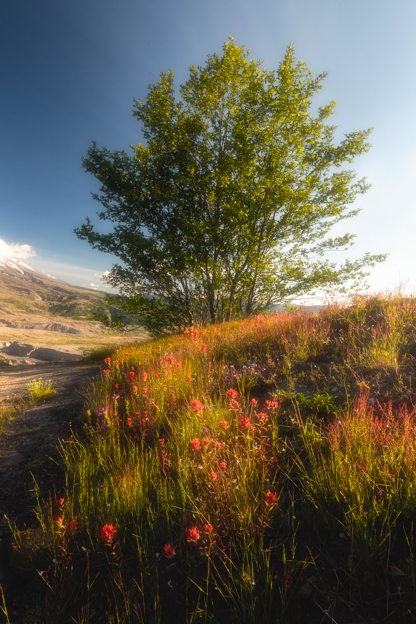 Mount St. Helens Photography: 'Field of Red'