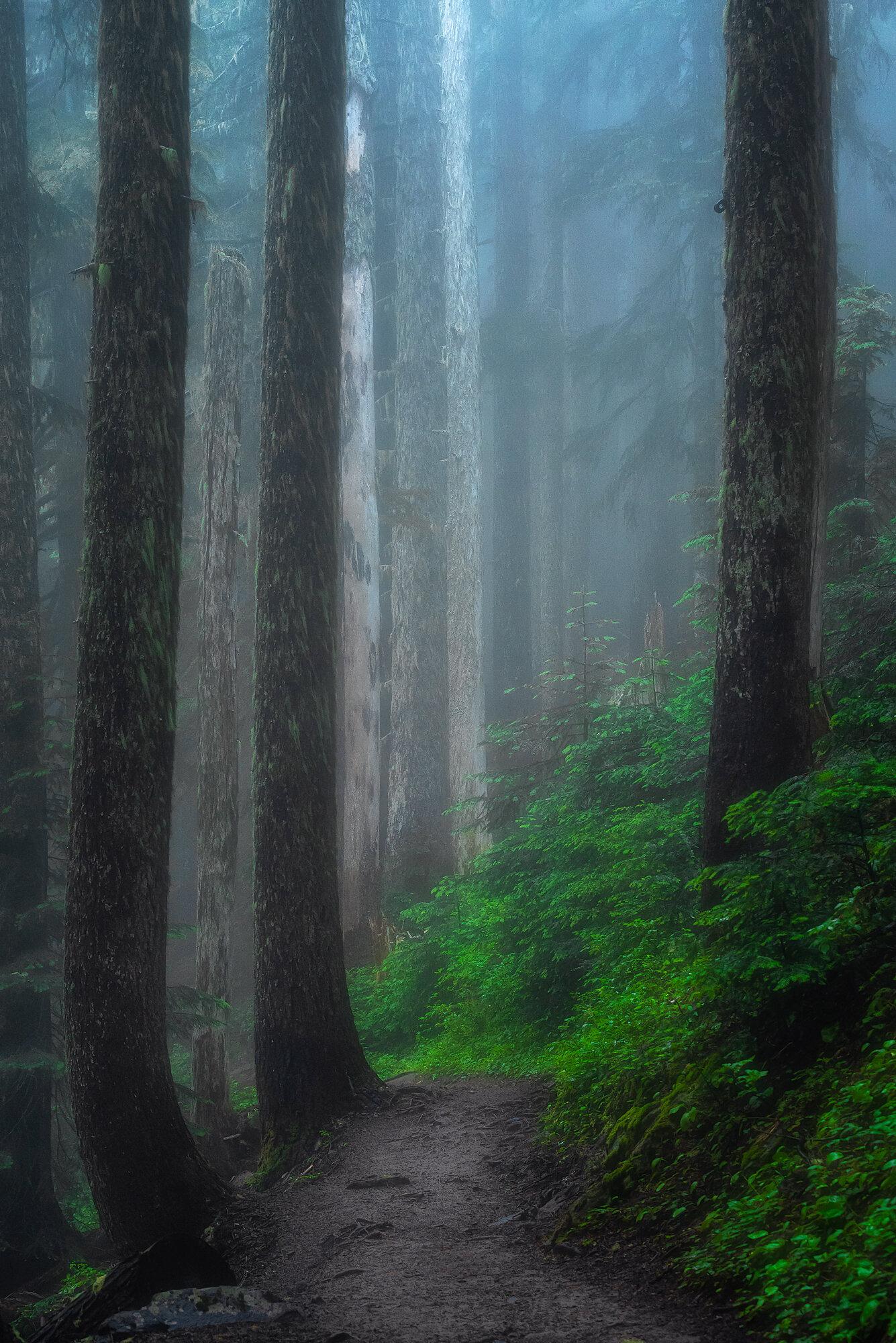 Mount Rainier Photography: 'Painterly Fog'
