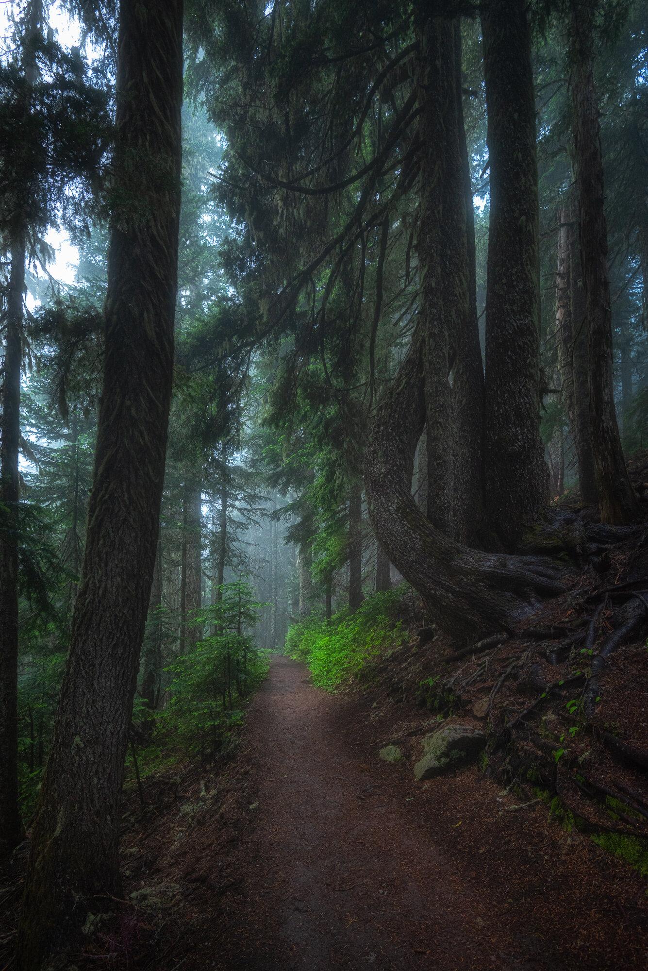 Mount Rainier Photography: 'Path into Fog'