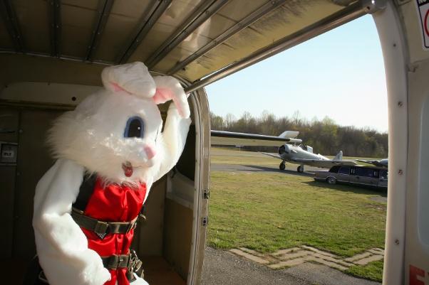 bunny-skydiving-3.jpg