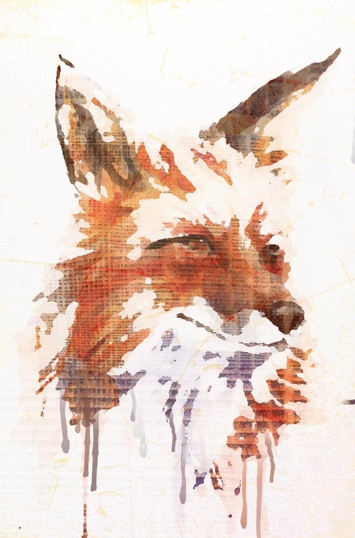 Red the Fox.jpg