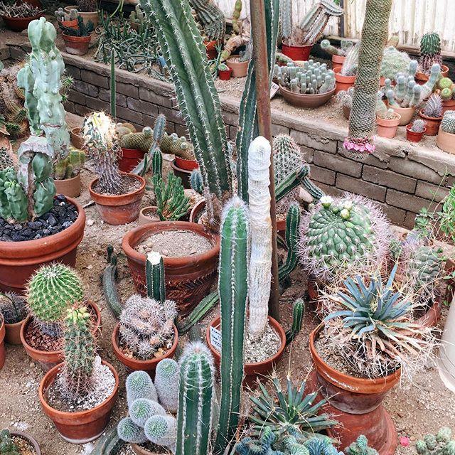 A prickly little corner of Moorten Botanical Gardens🌵