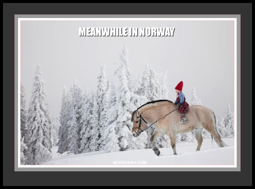 meanwhile in norway meme girl on fjord horse in snow norwegian alt for norge norskarv