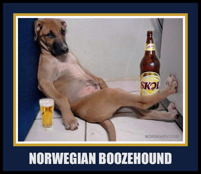 norwegian boozehound booze hound dog meme norway norskarv alt for norge skol beer funny humor humorous