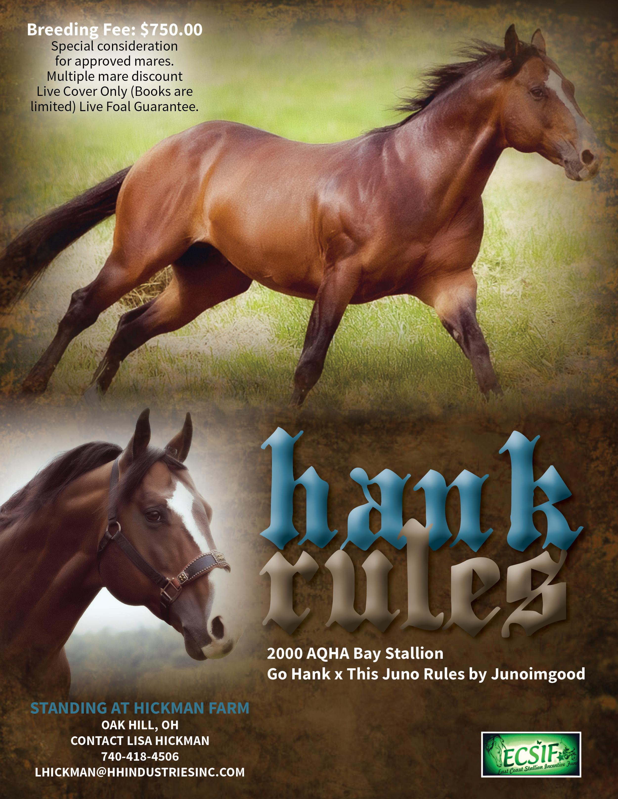 HankRules_stallion_ad_updated_FINAL.jpg