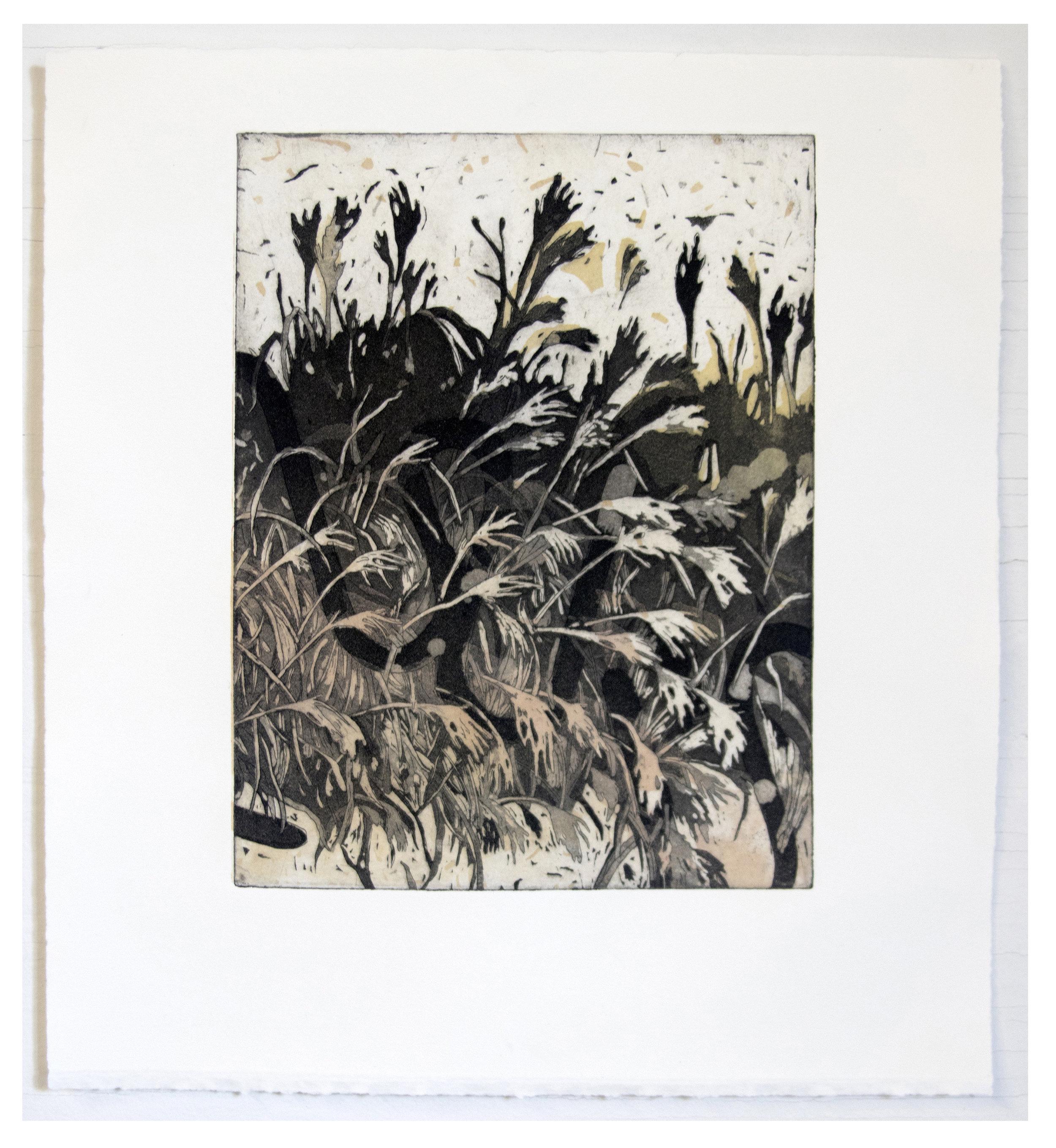 Bran. N. Grain ; Intaglio and Screen-print, 11''x14'', 2017