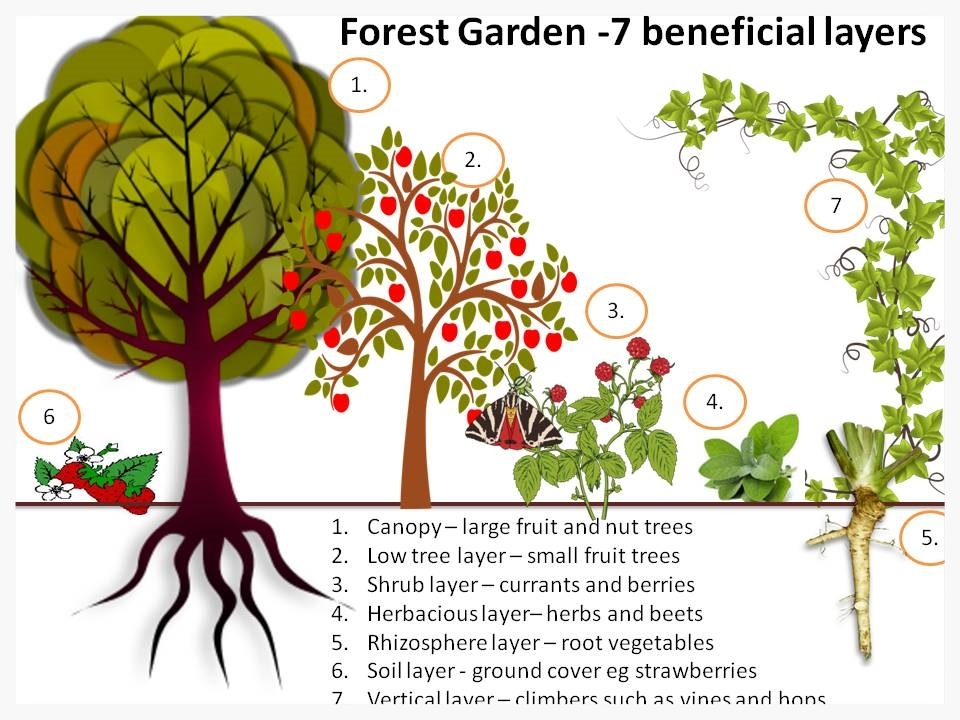 Forest garden 7 layers of edible plants