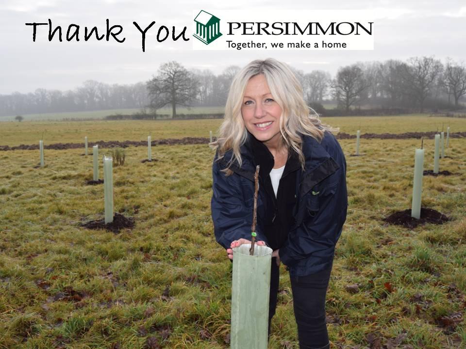 Persimmon Studley.jpg