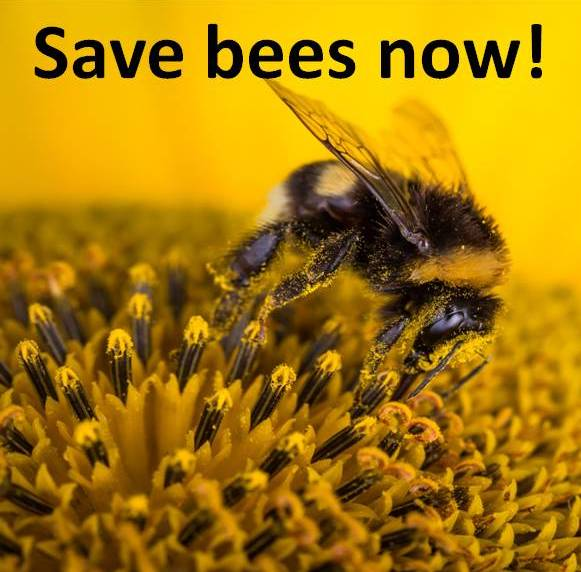 Save bees now.jpg