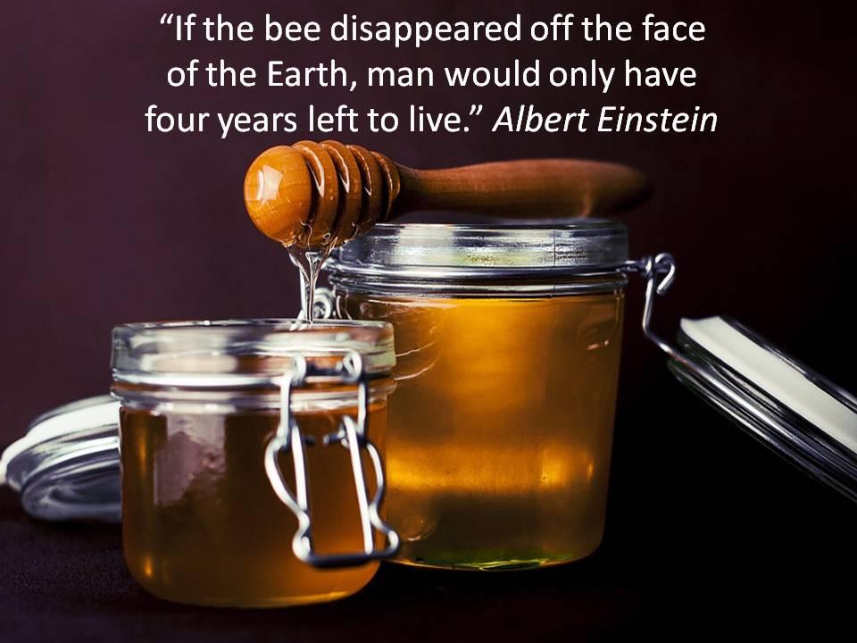 Bees Needs Challenge 2017.jpg