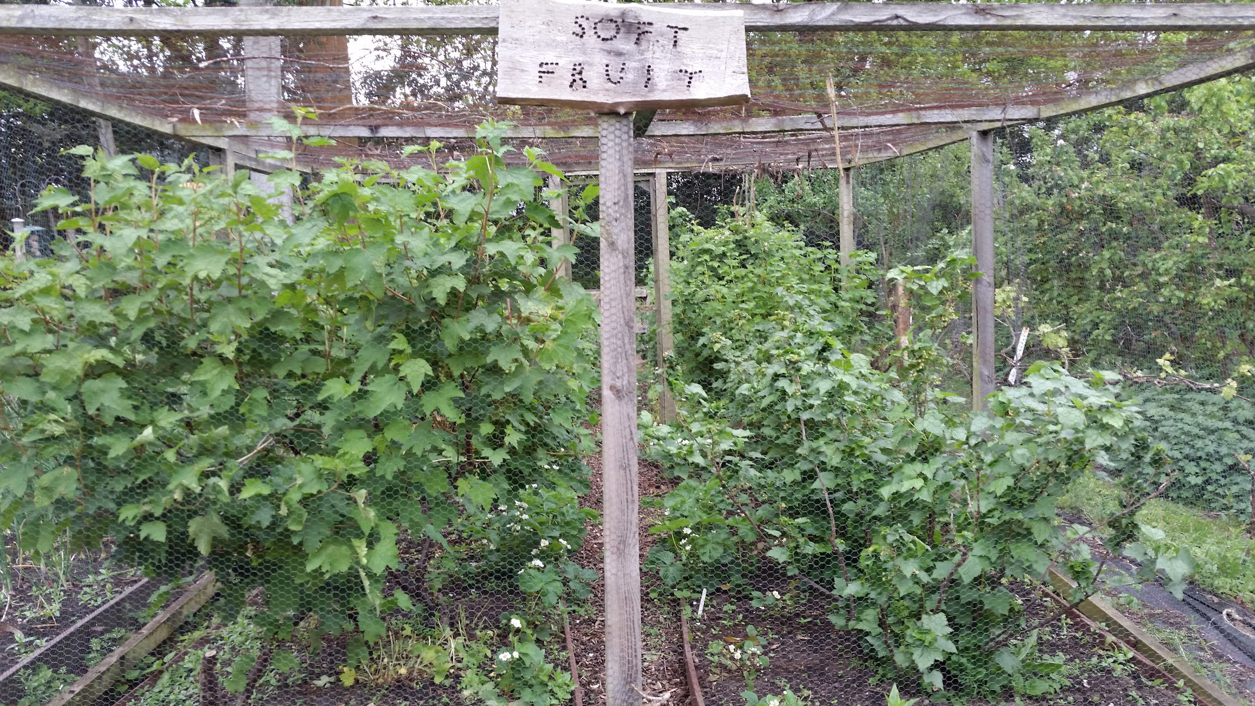 Martineau_garden_fruit_cage.jpg
