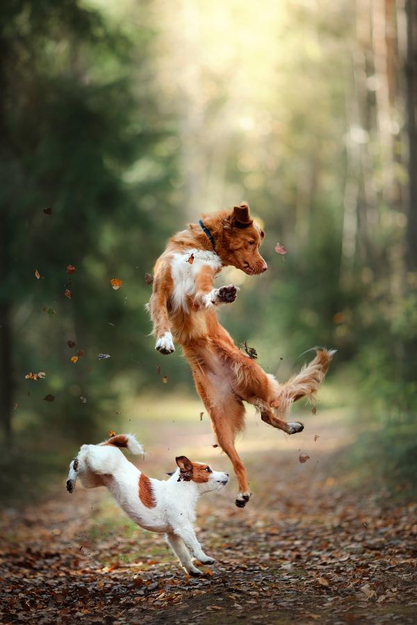 Bakjac Dog.jpg