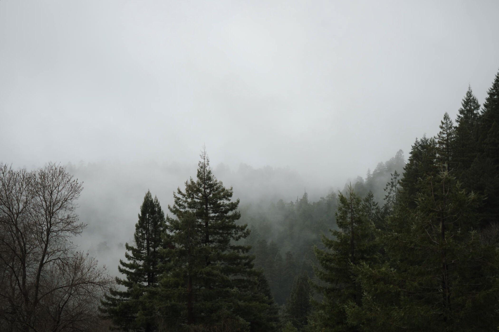 california+redwoods.jpeg