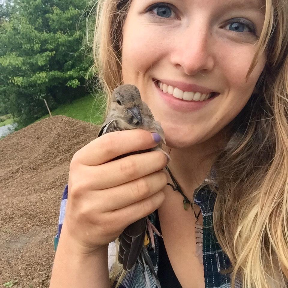 Injured Dove Rescue