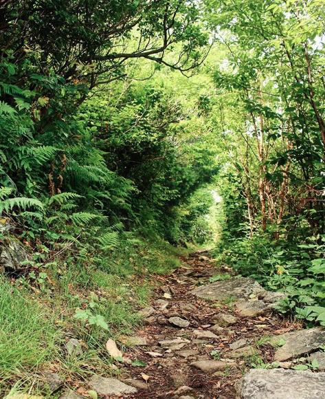 Appalachian-Trail-Shenandoah.png