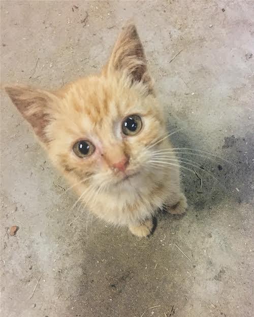 rescued kitten.jpg