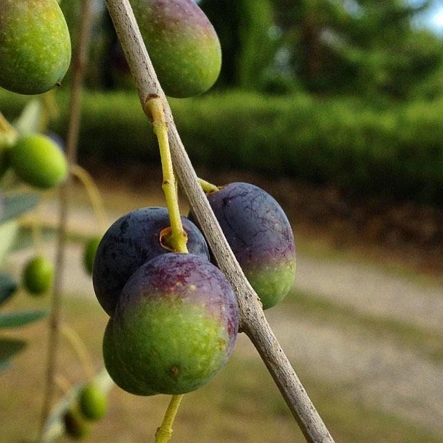 närbild oliver.jpg