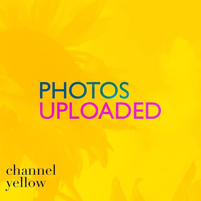 photos are in 🌻✨ // click the link in bio to check out some of the photos from #channelyellow!  __  we're trying to stay here in this yellow vibe as long as we can but we feel fall coming in with its wild card, ready to change the color on us. __  #artshow #njartist #nycartist #livemusic #yellow #sunflowers #artcollector #music #performanceart #musician #bodypainting #artexhibit #njartshow