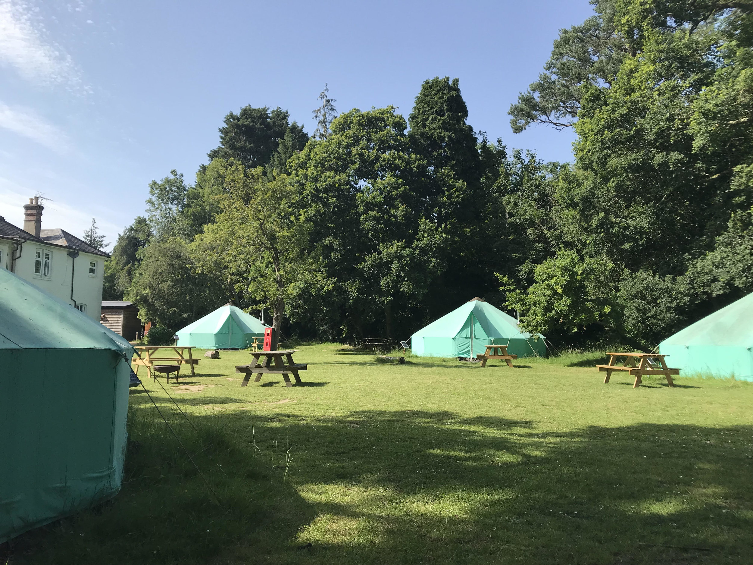 Wild Night Out Camp-Out New Forest.jpg