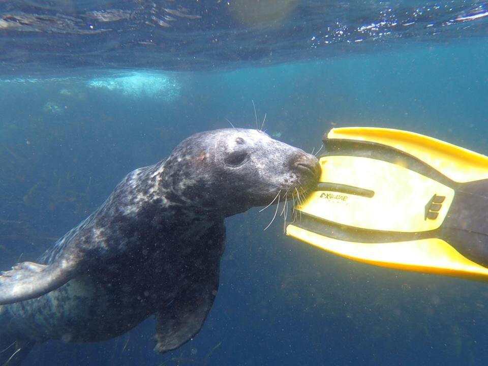 underwater britain.jpg