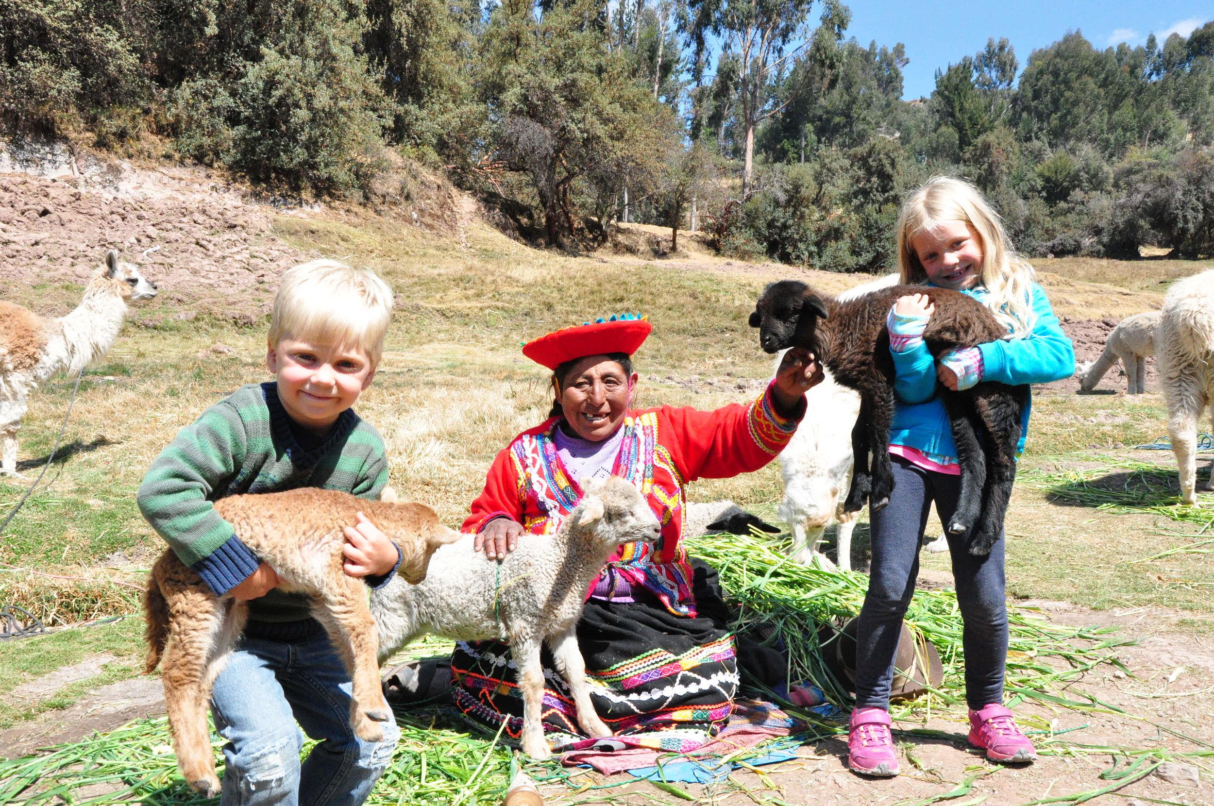 Baby llamas and alpacas