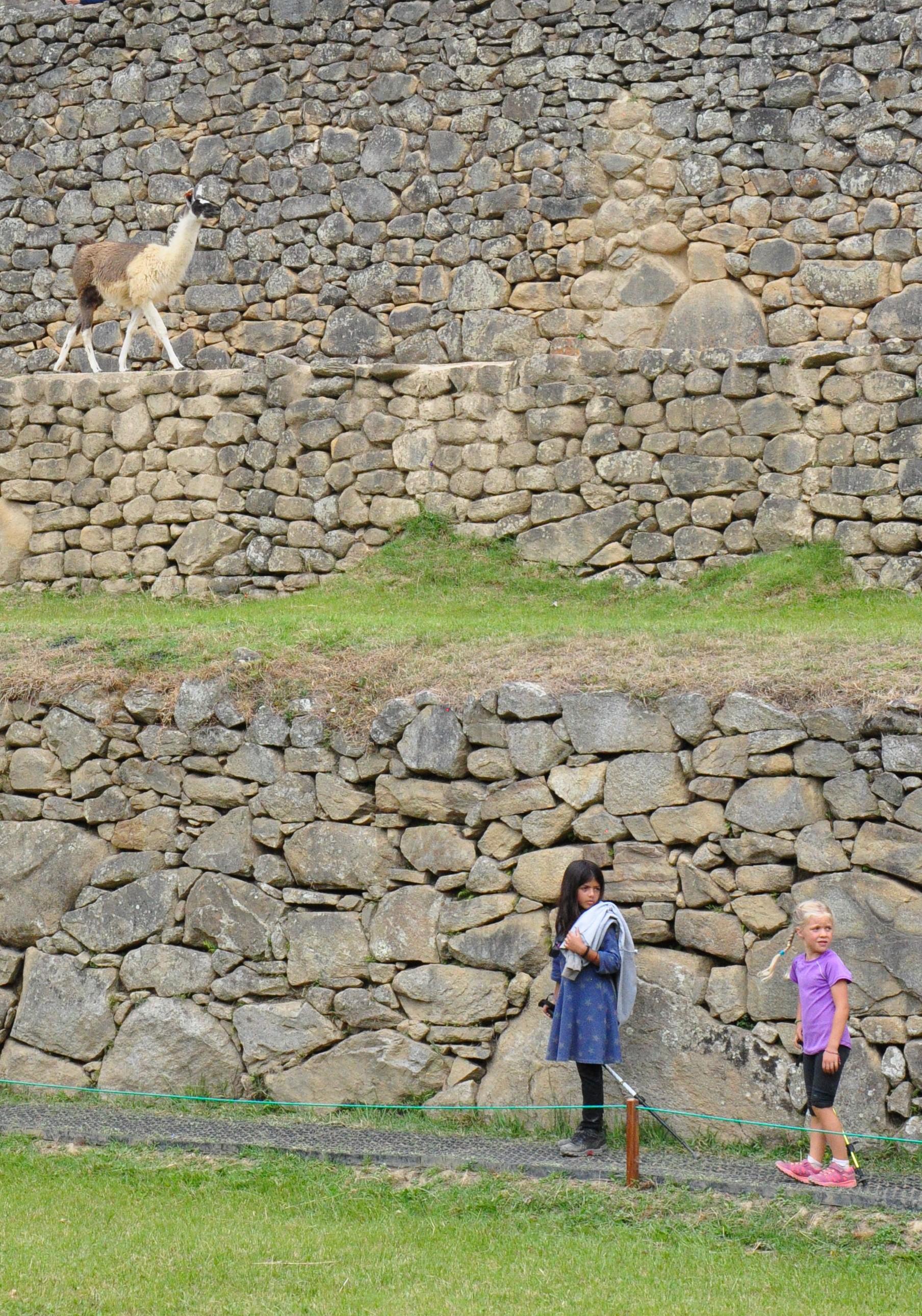 Llamas and beautiful children exploring the ruins