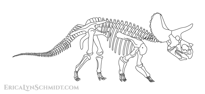 Homer the Triceratops Skeleton Drawing