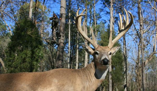 bowhunter-drawing-on-deer3-600x350.jpg