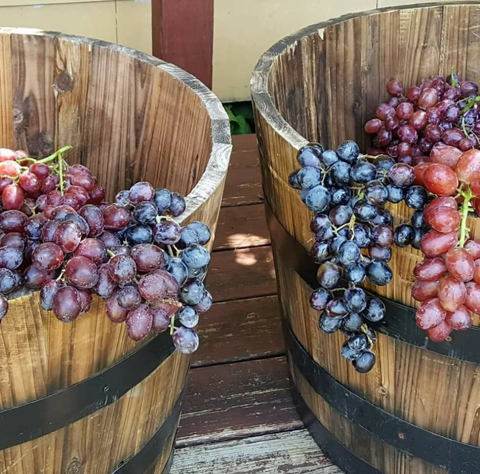 Winery Events - Take part in our exciting events throughout the year like our Annual Grape Stomp!Or become a member and attend exclusive events just for our members.