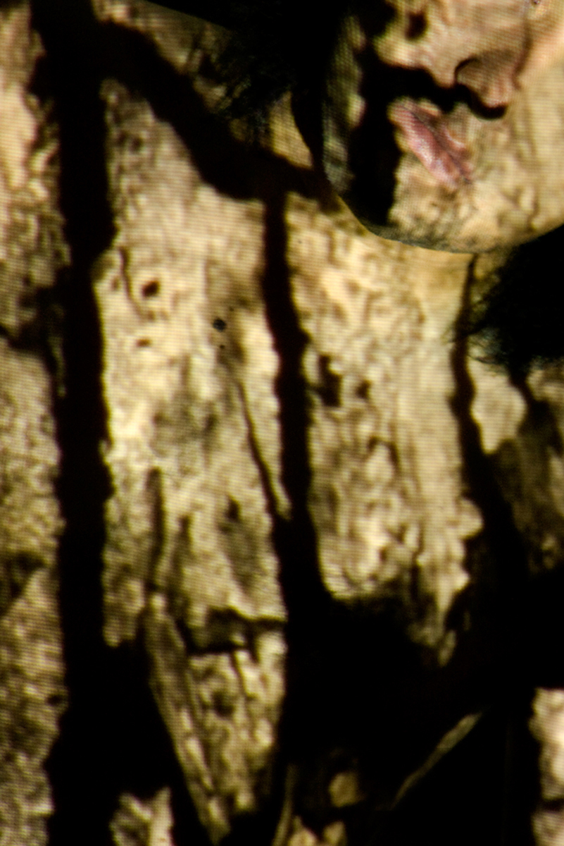 "Donna Amirpour   The following is placeholder text known as ""lorem ipsum,"" which is scrambled Latin used by designers to mimic real copy. Mauris id fermentum nulla. Aliquam bibendum, turpis eu mattis iaculis, ex lorem mollis sem, ut sollicitudin risus orci quis tellus."